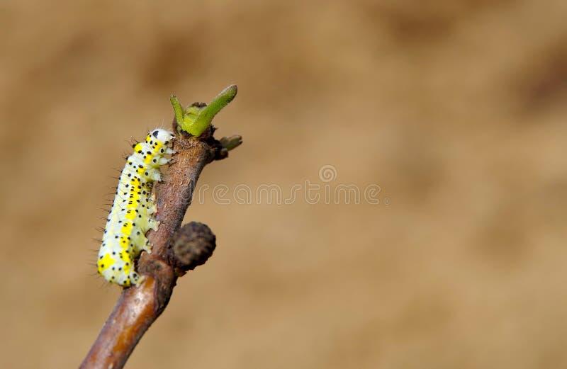 Geel Caterpillar royalty-vrije stock foto