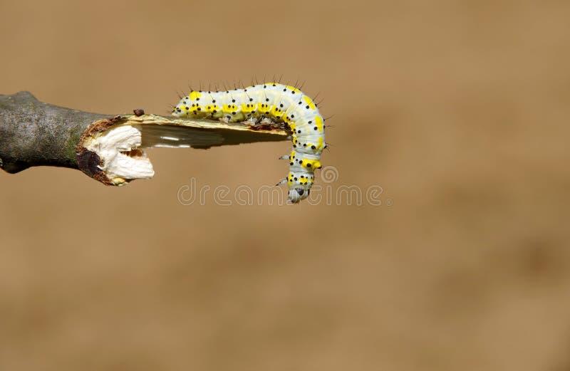 Geel Caterpillar stock foto