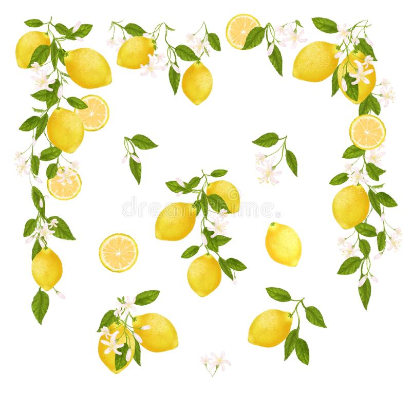 Geel citrusvruchten uitstekend kader Citroen, Bladeren en Bloemen Tropische illustratieillustratie Groene Achtergrond vector illustratie