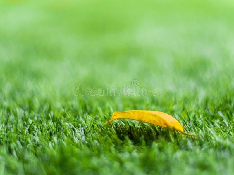 Geel dalingsblad op het kunstmatige gras door ondiepe diepte van fie stock afbeeldingen