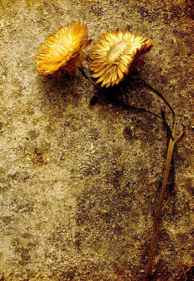 Geel de bloemstilleven van Grunge - royalty-vrije stock foto's