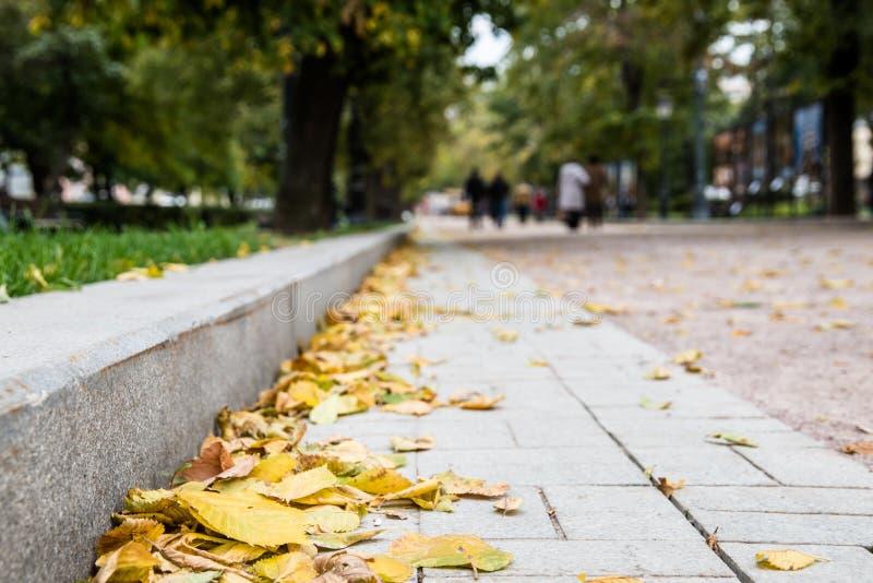 Geel de herfstgebladerte bij de steenrand van een straat stock foto's