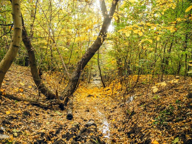 Geel die de herfstbos met bladeren met een beek wordt behandeld royalty-vrije stock foto's