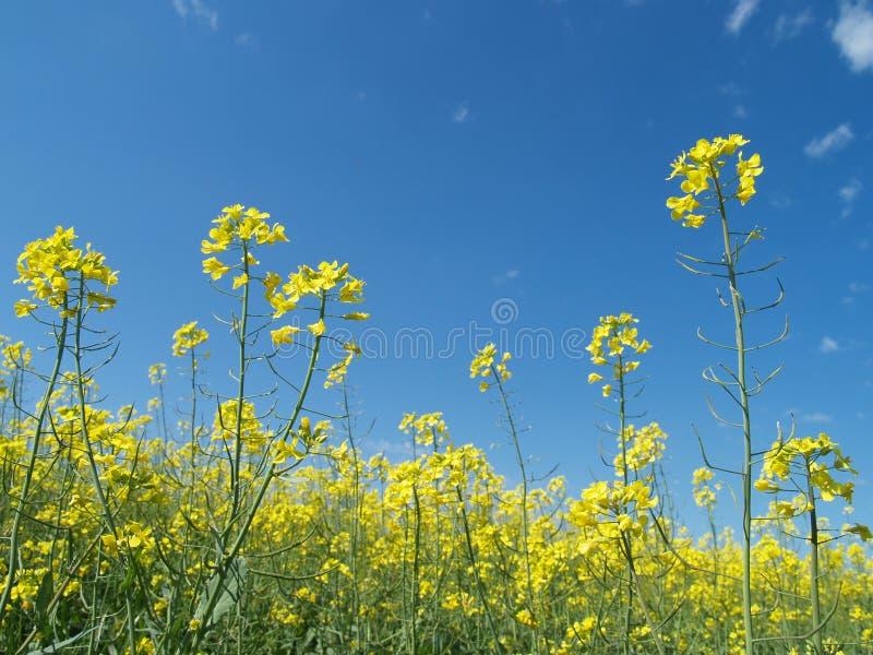 Geel en blauw stock fotografie