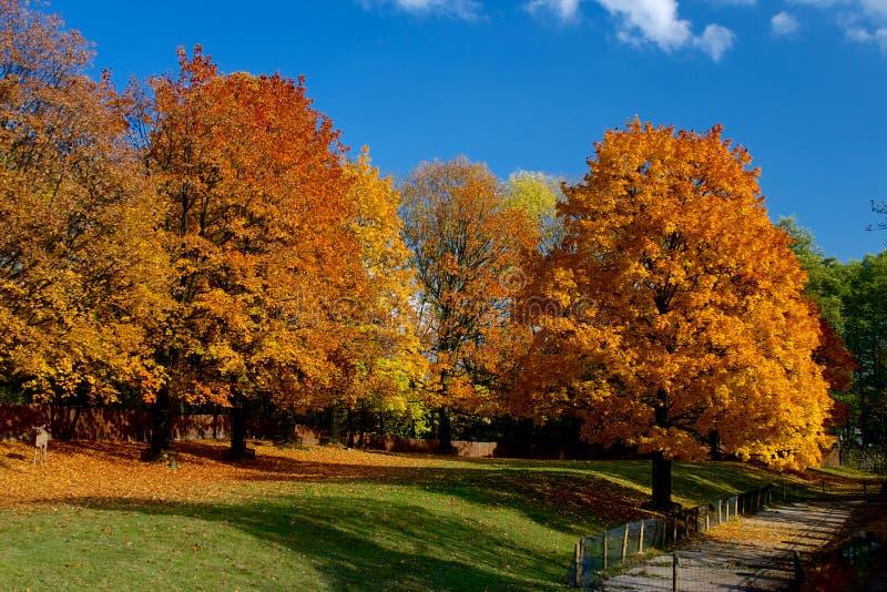 Geel en rood doorbladert op bomen in de herfst, oktober royalty-vrije stock foto