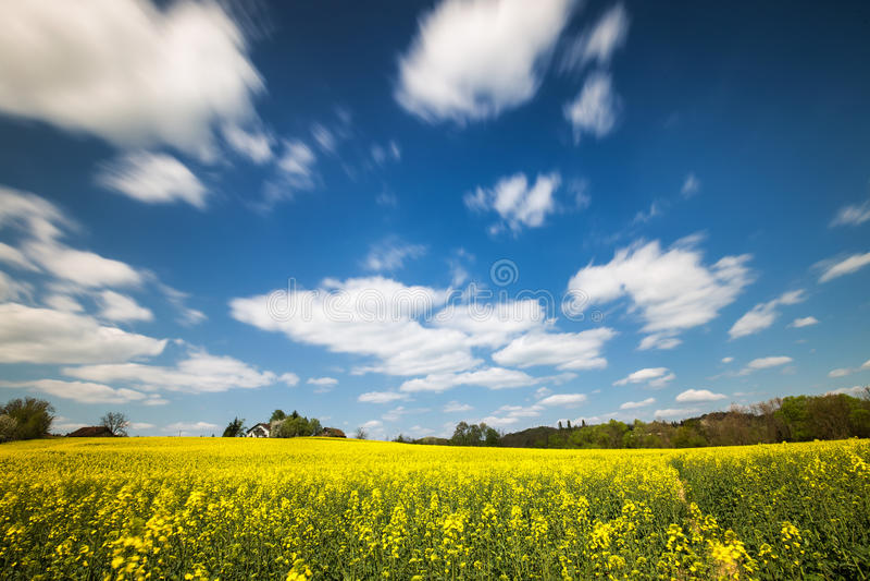 Geel gebied onder een blauwe hemel royalty-vrije stock afbeelding
