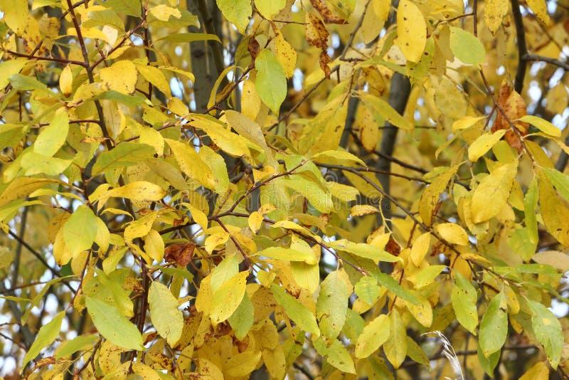 Geel gebladerte van bomen in de herfst royalty-vrije stock fotografie