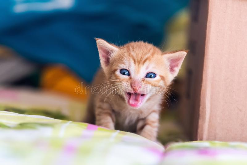 Geel gestreepte katkatje stock afbeelding