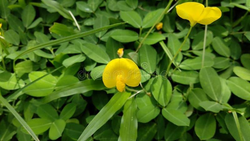 Geel gras royalty-vrije stock afbeeldingen