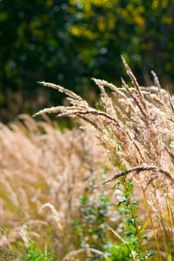 Geel gras stock afbeelding