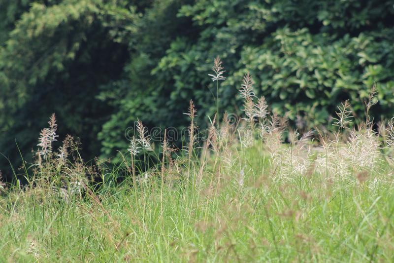 Geel gras royalty-vrije stock foto