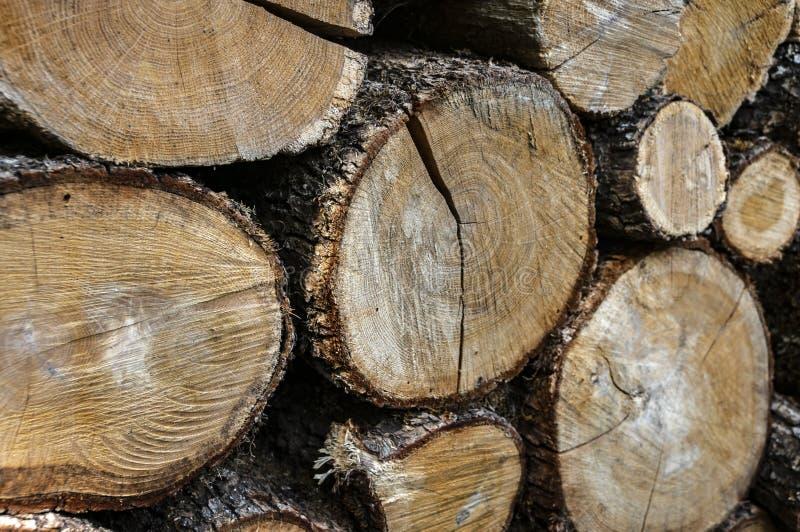 Geel, grijs, bruin Originele textuur van gehakte en gestapelde stapel van natuurlijk eiken hout stock foto