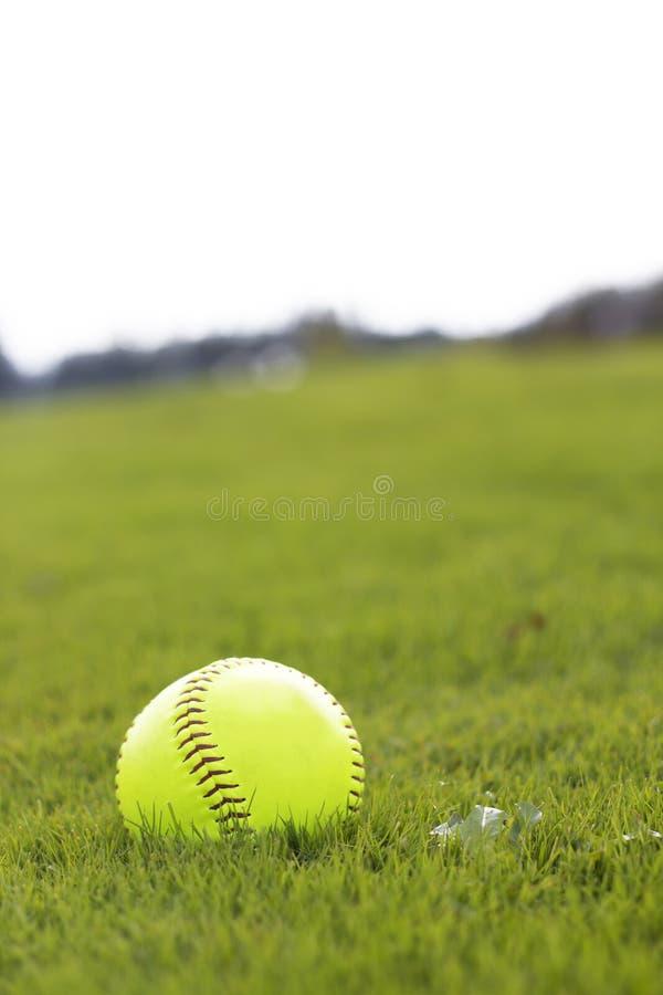 Geel honkbal op parkgras stock afbeelding