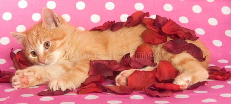 Geel katje en roze stippen stock foto's