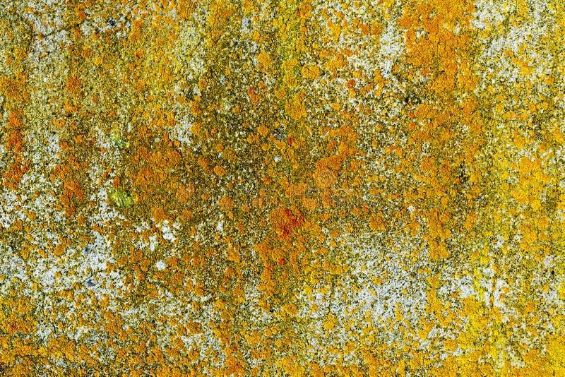 Geel korstmos op concrete muur royalty-vrije stock afbeelding