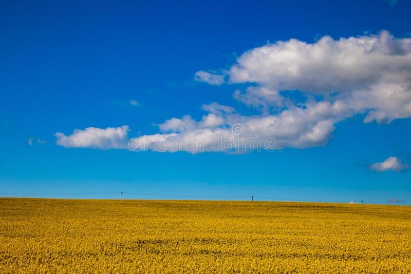 Geel landbouwgebied van raapzaad royalty-vrije stock foto's