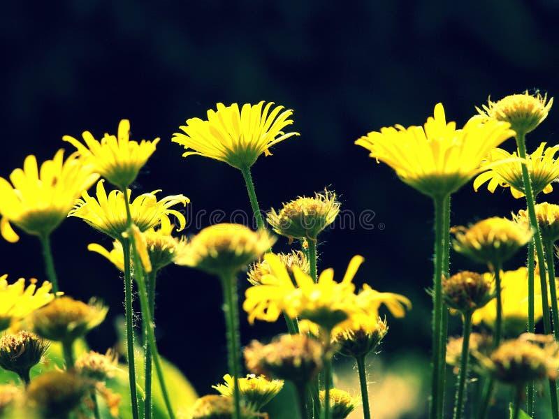Geel leger van bloemen stock fotografie