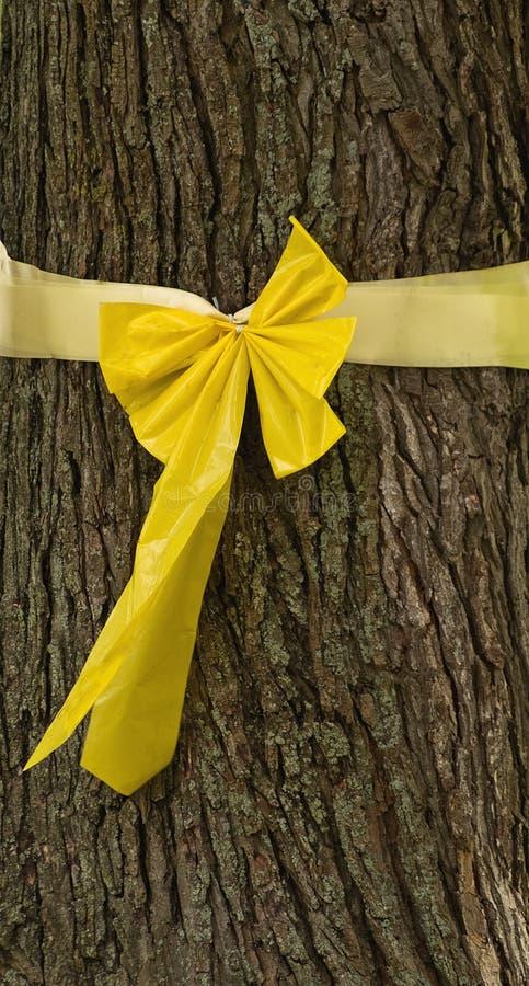 Geel lint dat rond boom wordt gebonden stock foto