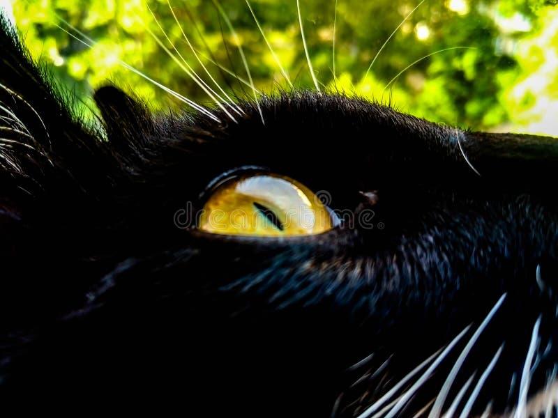 Geel oog van een zwarte kat tegen een achtergrond van gebladerte royalty-vrije stock foto's