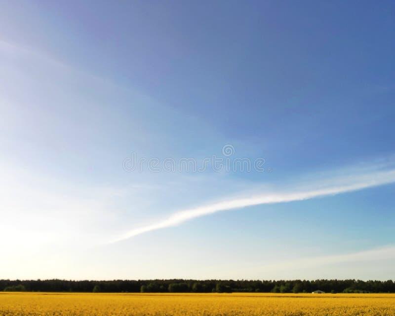 Geel raapzaadgebied bij zonsondergang, gelukkige ogenblikken stock afbeeldingen