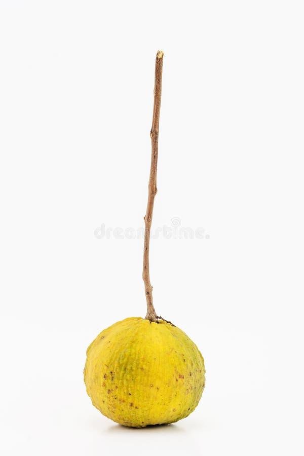 Geel santolfruit royalty-vrije stock afbeeldingen