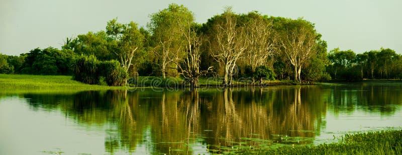 Geel Water stock foto's
