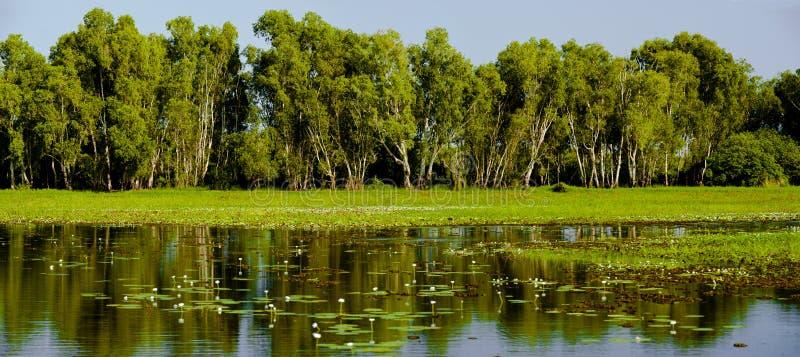 Geel Water stock afbeelding