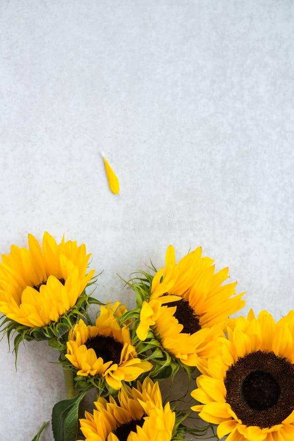 Geel Zonnebloemboeket op Grey Background, Autumn Concept royalty-vrije stock fotografie
