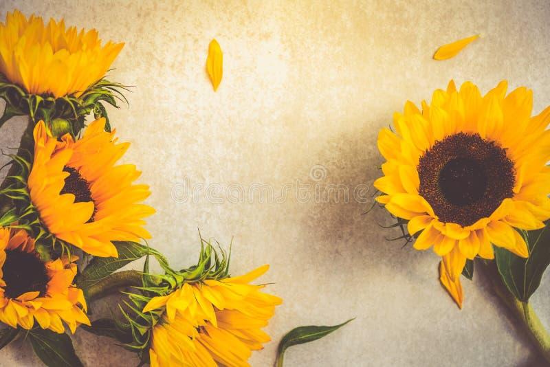 Geel Zonnebloemboeket op Grey Background, Autumn Concept royalty-vrije stock foto's