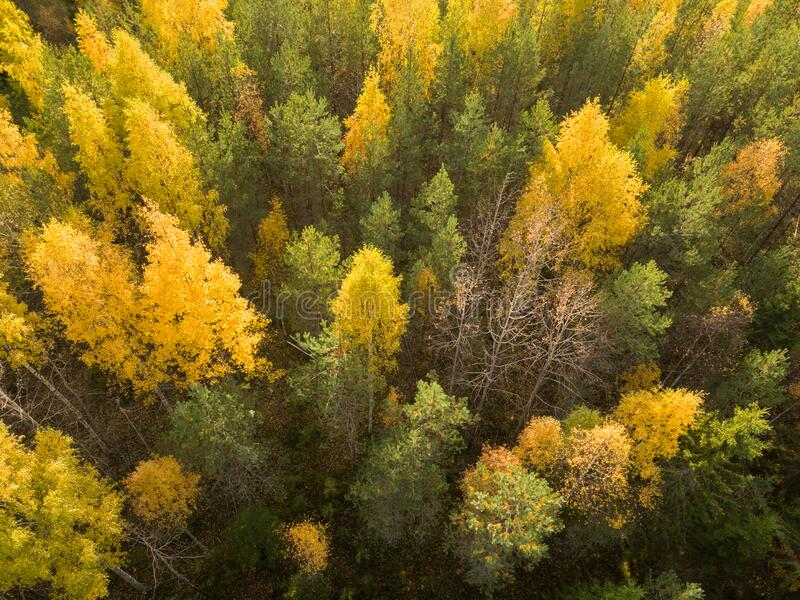 Geelbladgroen van loofbomen in het najaar stock fotografie