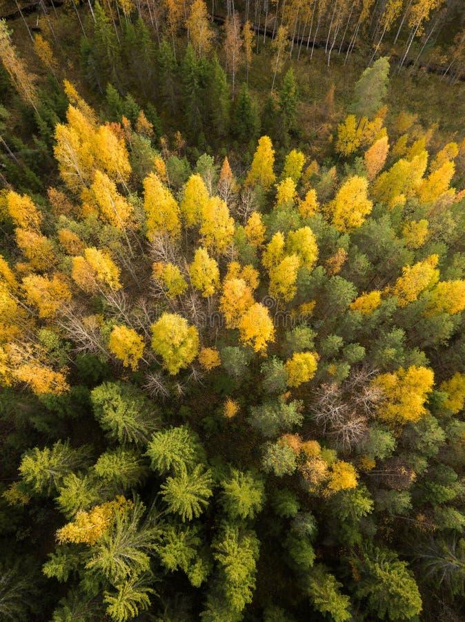 Geelbladgroen van loofbomen in het najaar stock foto's