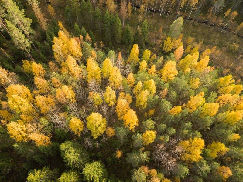 Geelbladgroen van loofbomen in het najaar royalty-vrije stock fotografie