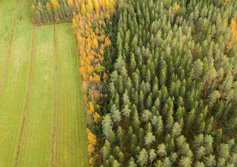 Geelbruin bos per hooiveld in het najaar stock afbeelding