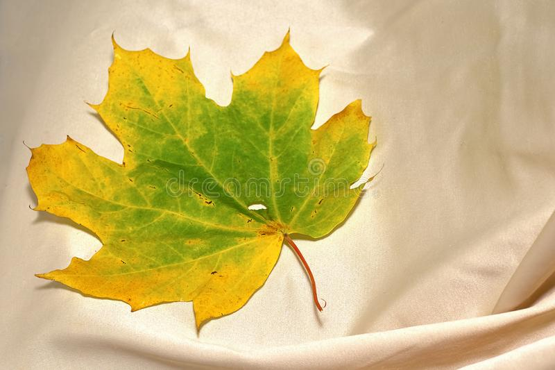 Geelgroen esdoornblad op de achtergrond van tafelkleedclos stock foto's