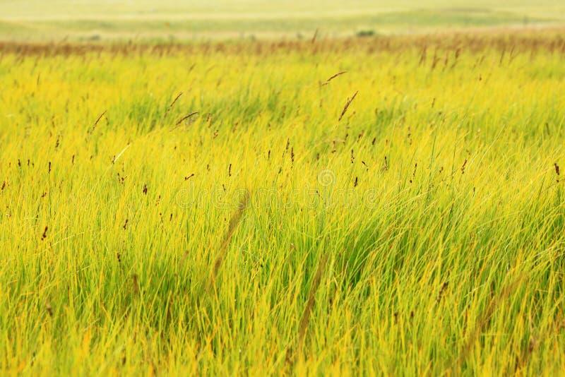 Geelgroen moerasland stock fotografie