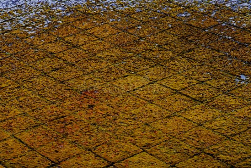 Geelgroene abstracte grungeachtergrond stock foto
