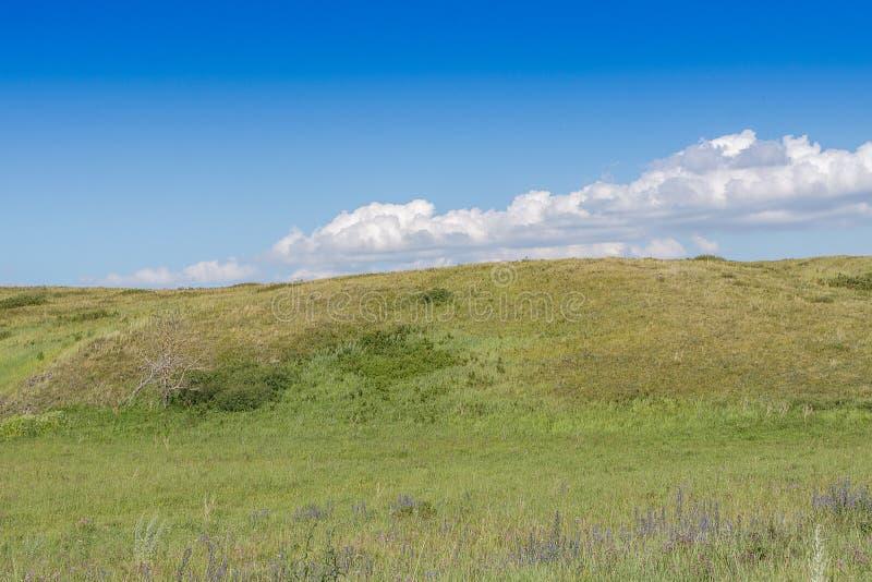 Geelgroene heuvel en hemel met wolken Wilde Grassen royalty-vrije stock foto's