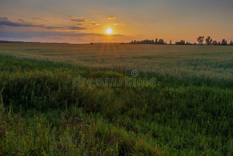 Geeloranje schijf van de het plaatsen zon over de horizon en een weinig bewolkt royalty-vrije stock afbeelding