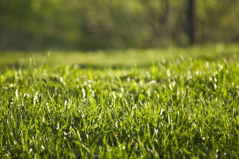 Geen-Gras stockfotografie