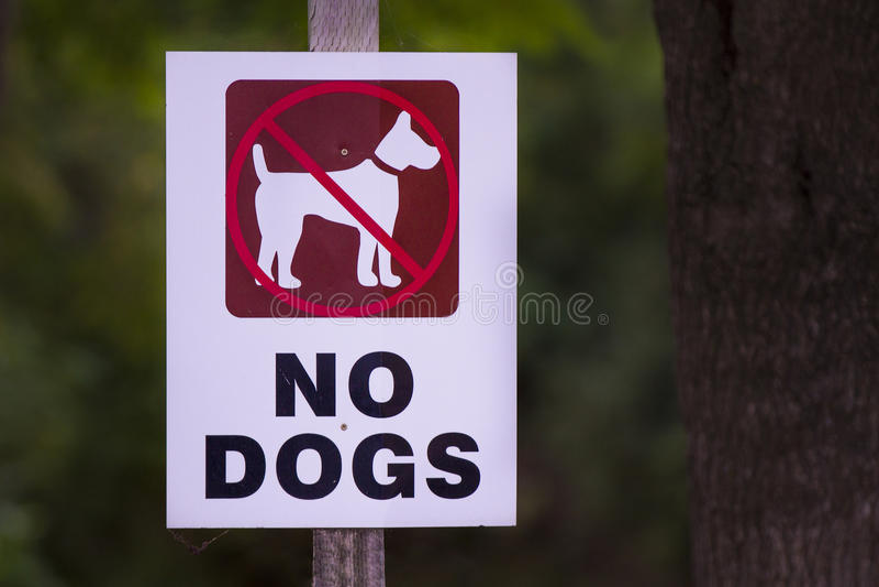 Geen honden stock afbeeldingen