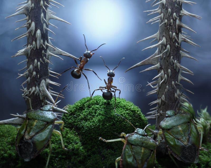 Geen monsters bij Rot Moeras! mieren thriller stock fotografie