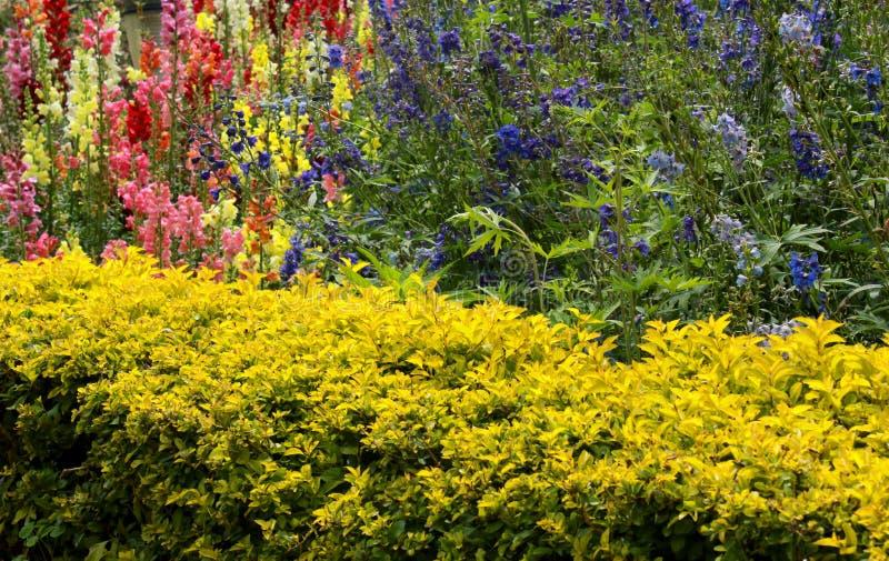 Geerntete Anlagen mit dekorativem Garten blüht im Bryant-Park, kodaikanal lizenzfreies stockbild