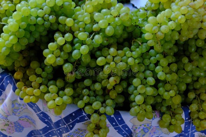 Geerntete Trauben auf Weinbergen stockfoto