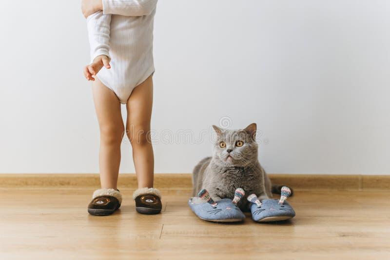 geernteter Schuss des kleinen Jungen und der grauen britischen shorthair Katze in den Lagerschwellen lizenzfreies stockbild