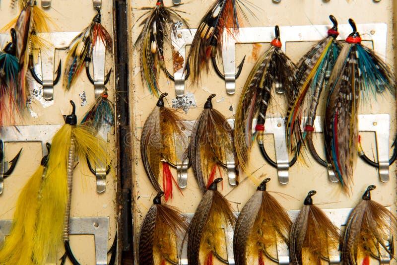 Geernteter Schuss von Lachs-flys in einem flybox lizenzfreie stockfotos