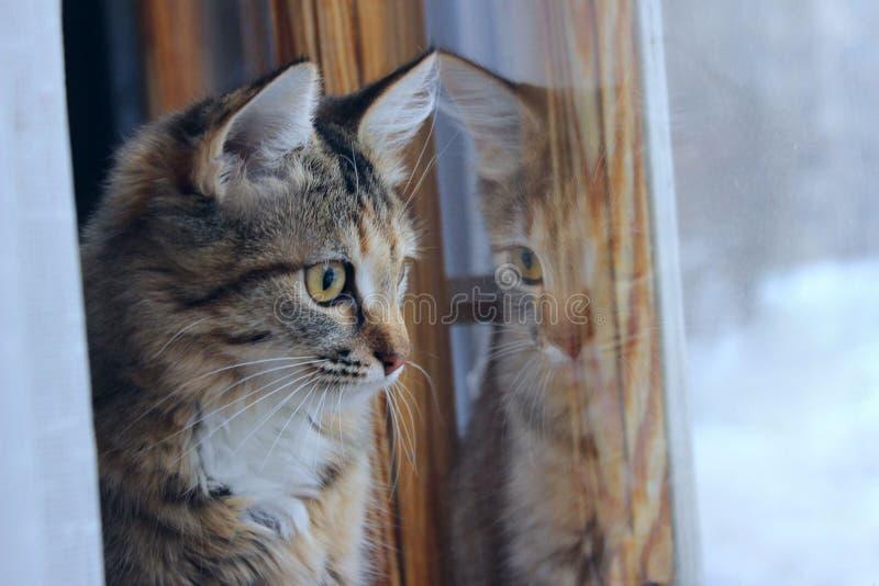 Geernteter Schuss von Tabby Cat lizenzfreie stockfotos