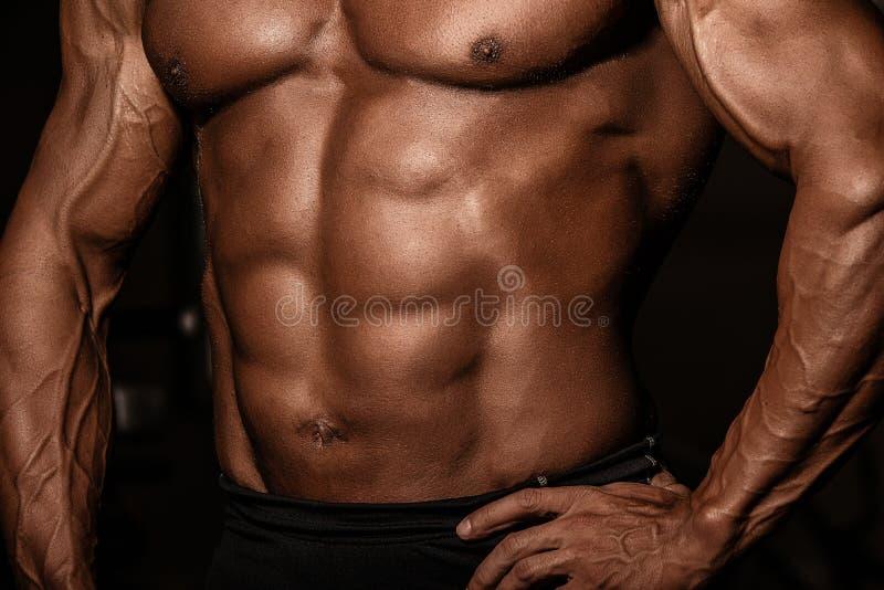 Geerntetes Bild des muskulösen Mannes bräunte Torso des Bodybuilders Starker Athletenmann mit perfekter ABS, Schultern, Bizeps, T stockbild