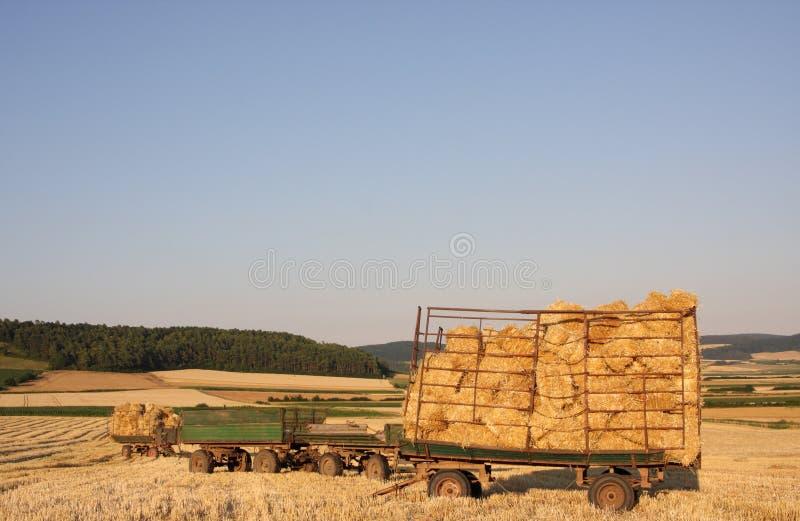 Geerntetes Feld stockfoto
