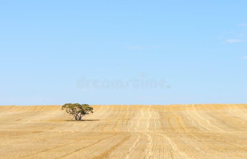 Geerntetes Feld, blauer Himmel, Hintergrund stockfotografie