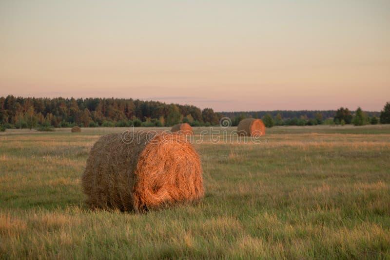 Geerntetes hügeliges Weizenfeld mit Strohballen stockbild